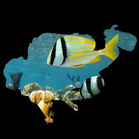littlediver